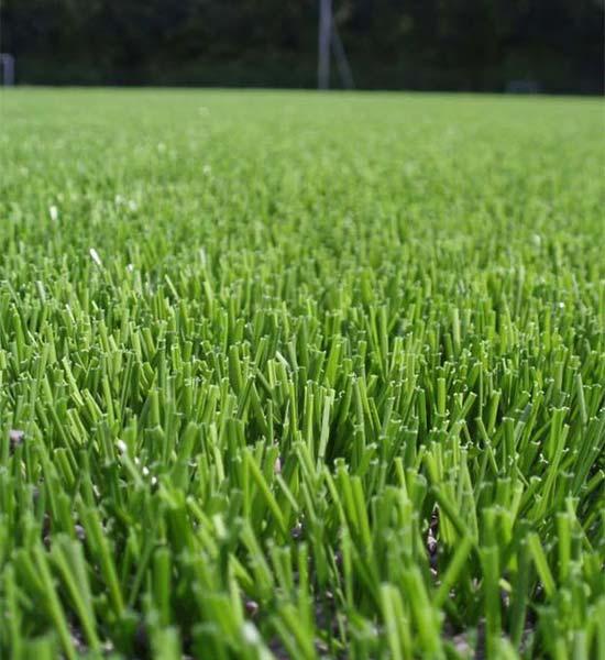 Dekorativna trava - Jadro Split