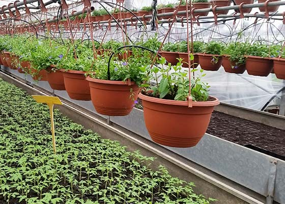 Vrtni centar Jadro Split sadnice
